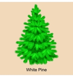 Christmas tree like white pine for new year vector