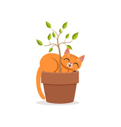 cute funny red cat sleeping in a flower pot with a vector image
