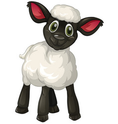 little lamb on white background vector image vector image