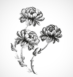 Hand-drawn bouquet of three flowers of peonies vector