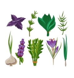 Set of 9 herbs vector image