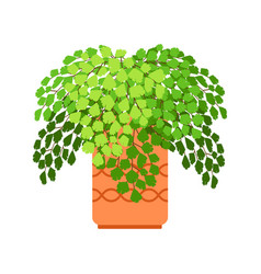 adiantum house plant vector image
