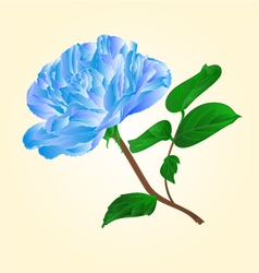 Blue rose stem with leaves and blossoms vector