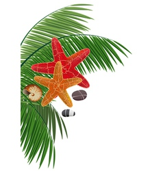 Palm branches starfishes pebble and cockleshell vector