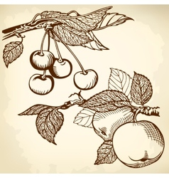 apple and charry brown vector image