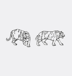 tiger emblem set vector image