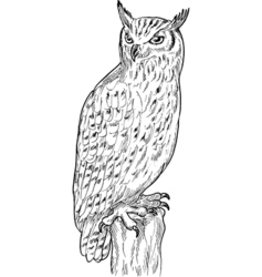 Eagle owl drawing vector