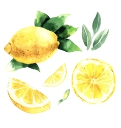 Watercolor set of lemons vector image
