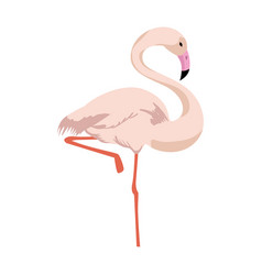 Flamingo bird icon vector