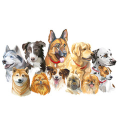 set of big and small dog breeds vector image vector image