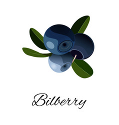 Bilberries isolated icon vector