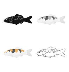 carp-koi fish icon cartoon singe aquarium fish vector image