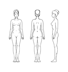Female body vector
