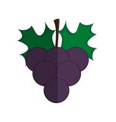 Grape fruit isolated icon vector