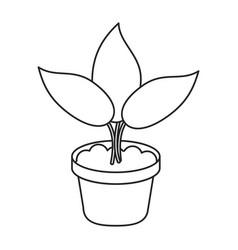 pot plant garden concept thin line vector image