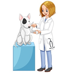 Vet wrapping dogs leg vector image
