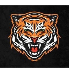 Aggressive tiger face on dark background vector