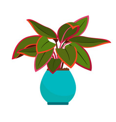 Aglaonema house plant vector