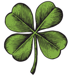 Clover with four leaf - vintage engraved vector