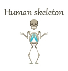Human organ icon in flat style human skeleton vector