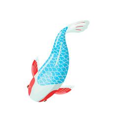 asagi carp koi fish traditional sacred japanese vector image