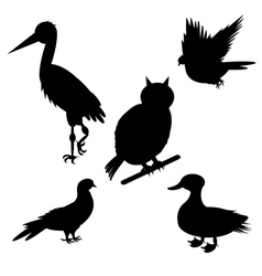 Monochrome silhouettes of different birds species vector