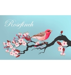 Bird on the cherry branch vector