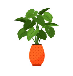 alocasia house plant in flower pot vector image