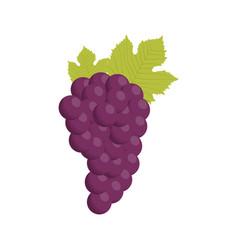 grape bunch fruit healthy vector image