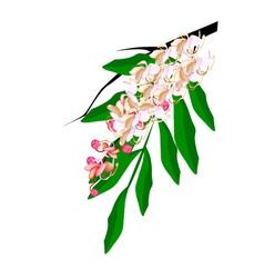 Hybrid of cassia fistula flower isolated on white vector