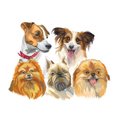 Set of small dog breeds vector