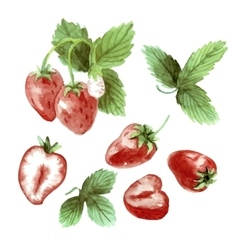 Watercolor set strawberry drawing vector image vector image
