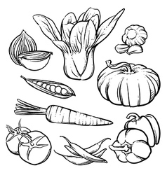 Vegetables outline hand drawn tomato and garlic vector