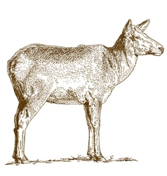 etching deer vector image