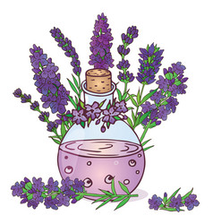 lavender-05 vector image vector image