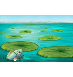 Lily pads vector