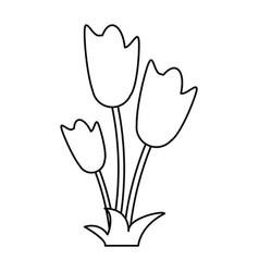 women day tulip bunch flower thin line vector image