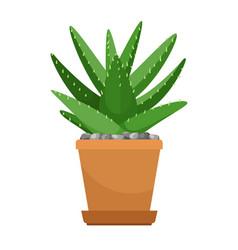Aloe vera in flower pot vector