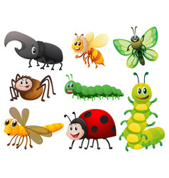 different kinds of small insects vector image