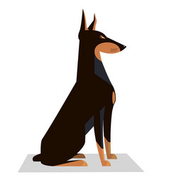 doberman sits on a white background vector image