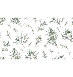 Eucalyptus seamless pattern of different willow vector