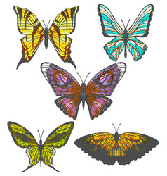 Set of colorful hand-drawn butterflies vector