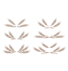 wheat ears design elements set vector image