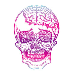 With a human skull and brains vector