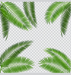 Palm leaf on transparent vector
