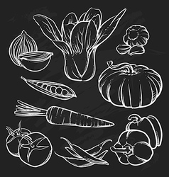 Vegetables outline hand drawn tomato vector