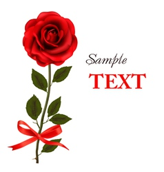 Red rose with bow and ribbons vector