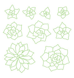 green linear succulent plant set on white vector image vector image