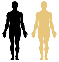 human body vector image vector image