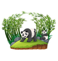 two pandas in bamboo forest vector image vector image